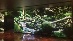 風景「屋久島」(動画、静止画)
